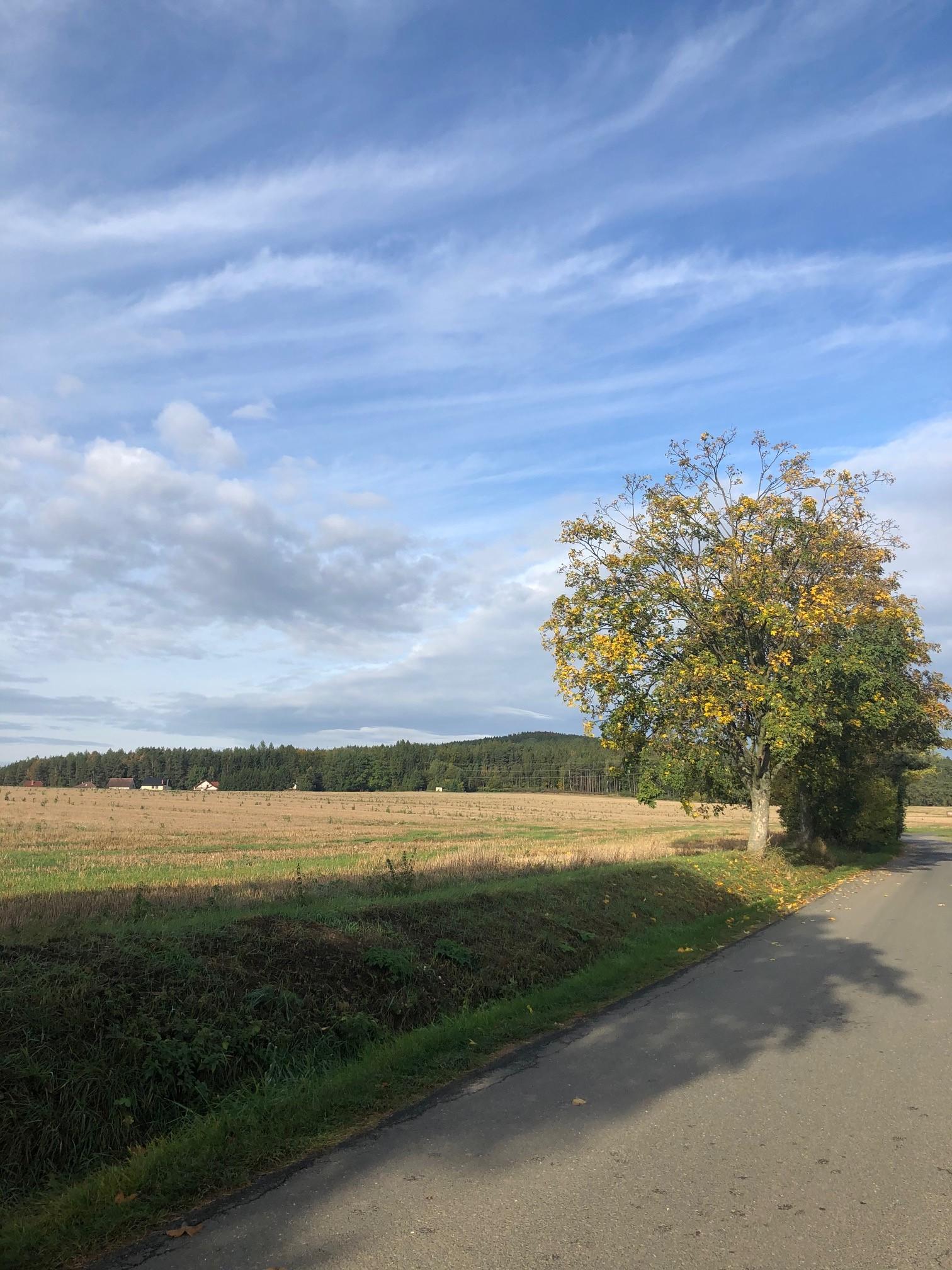 Fenomén dneška: sázení stromů