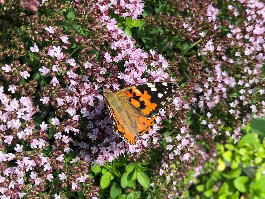 Biodiverzita aneb když chceme vkrajině víc než srnky, straky a slimáky